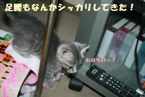 006_convert_20111024184111.jpg