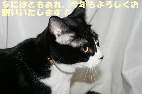 006_convert_20120104214735.jpg
