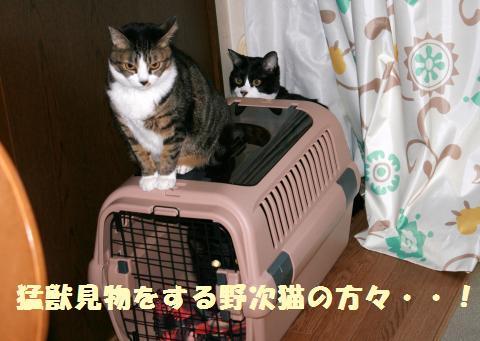 006_convert_20120212220559.jpg