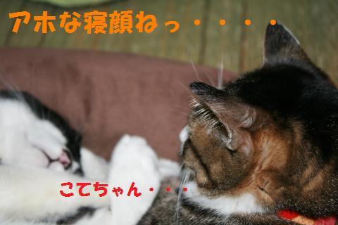 007_convert_20100411231350.jpg