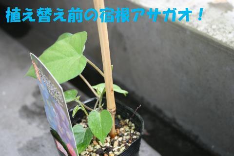 007_convert_20100530220412.jpg