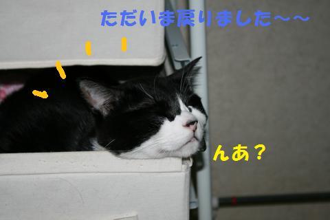 007_convert_20100807132520.jpg