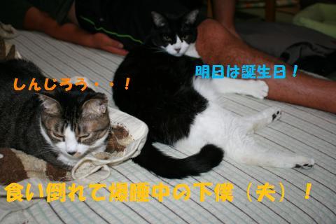 007_convert_20100918161820.jpg