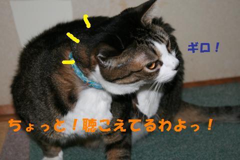 007_convert_20101001225957.jpg