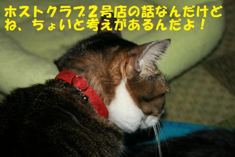 007_convert_20101022235702.jpg
