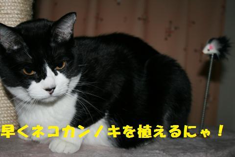 007_convert_20101202173315.jpg