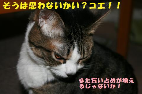 007_convert_20110323224216.jpg