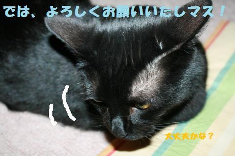 007_convert_20110415191802.jpg