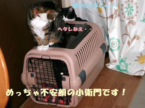 007_convert_20120212220636.jpg