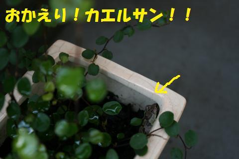 008_convert_20100320230827.jpg
