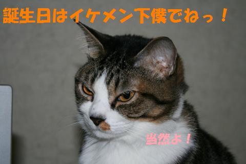 008_convert_20100424215241.jpg