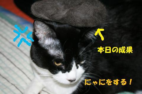 008_convert_20100516222816.jpg