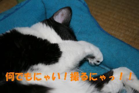 008_convert_20100524230227.jpg