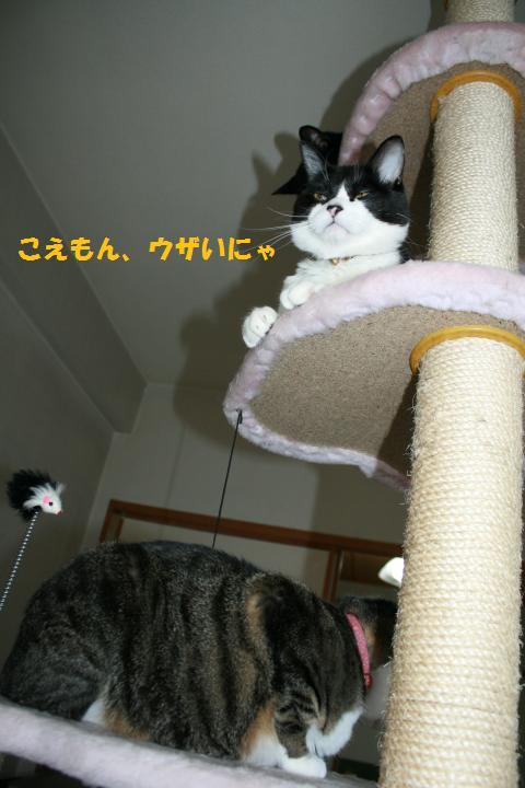 008_convert_20100607180529.jpg