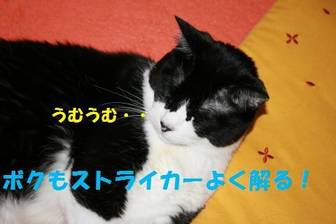 008_convert_20100622170050.jpg