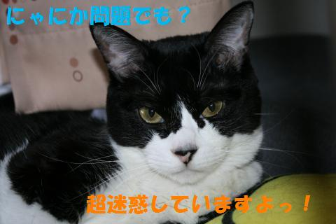 008_convert_20100904212334.jpg