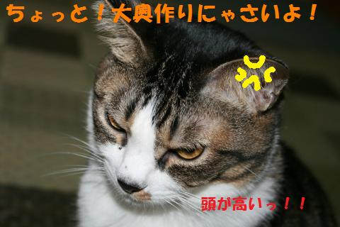 008_convert_20100914222827.jpg