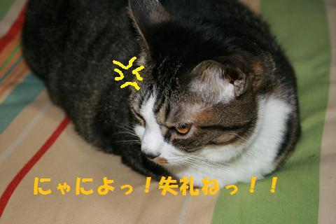 008_convert_20100917225840.jpg