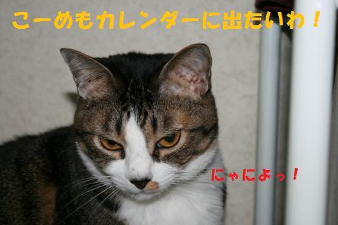 008_convert_20100925211044.jpg