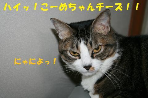 008_convert_20101018171121.jpg