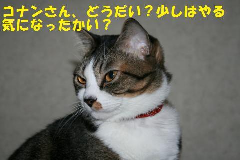 008_convert_20101103212930.jpg