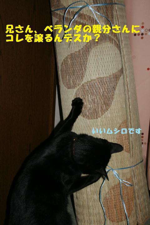 008_convert_20101223203721.jpg