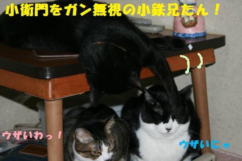 008_convert_20110115225757.jpg