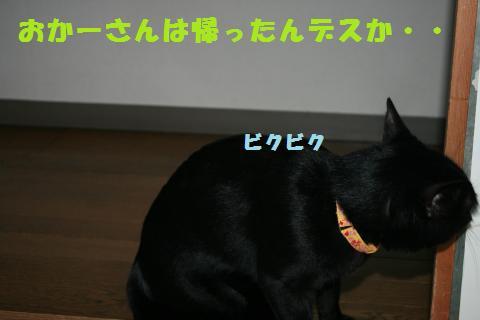 008_convert_20110122192504.jpg