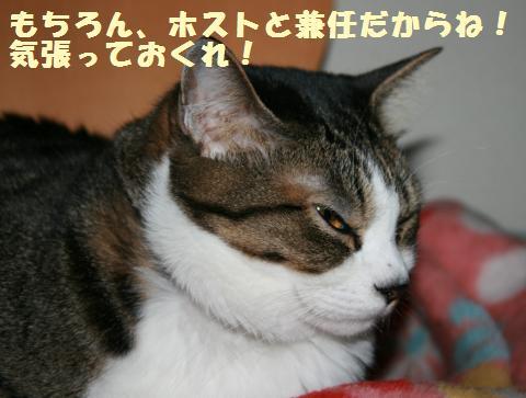 008_convert_20110521233647.jpg