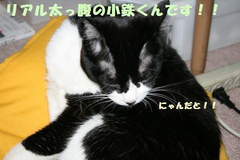 008_convert_20110601230421.jpg