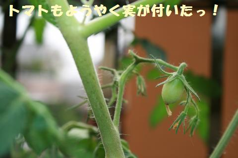 008_convert_20110807154744.jpg