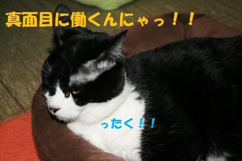 009_convert_20100326230527.jpg
