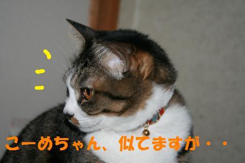 009_convert_20100410220458.jpg
