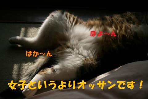 009_convert_20100603231635.jpg