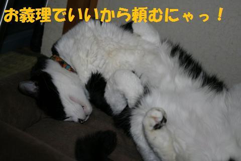 009_convert_20100608185348.jpg