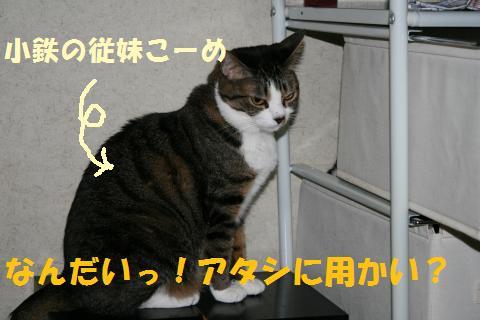 009_convert_20100705225810.jpg