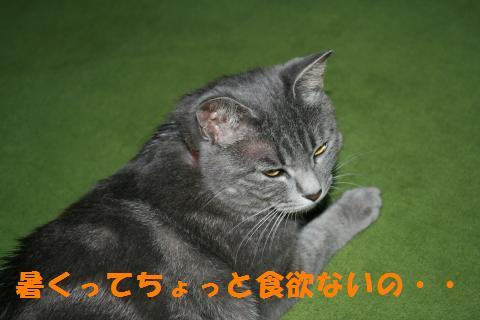 009_convert_20100726204119.jpg