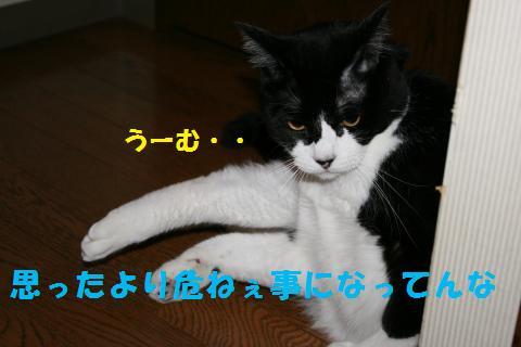 009_convert_20100809221029.jpg
