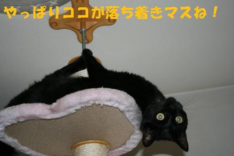009_convert_20100812185401.jpg