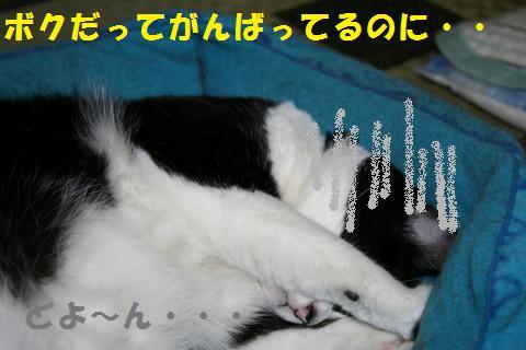 009_convert_20101003204111.jpg