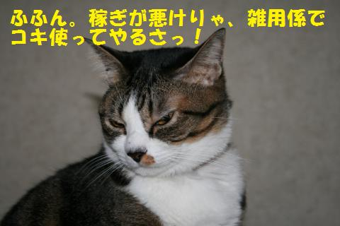 009_convert_20101103213107.jpg