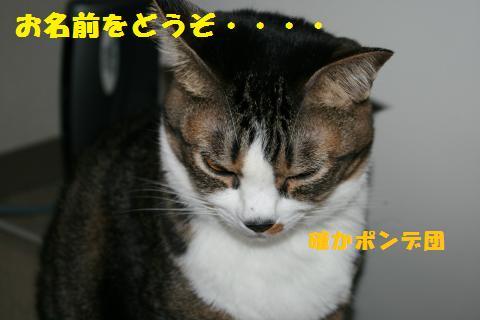 009_convert_20101126211948.jpg