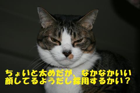 009_convert_20101217210406.jpg