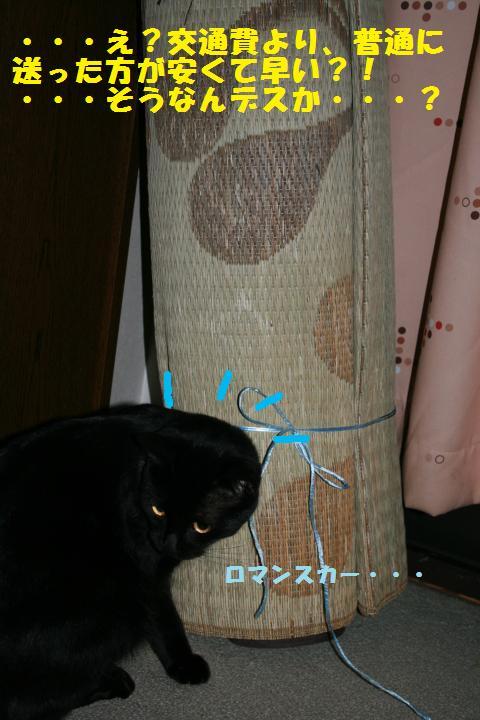 009_convert_20101223204248.jpg