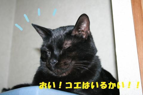 009_convert_20110109232145.jpg