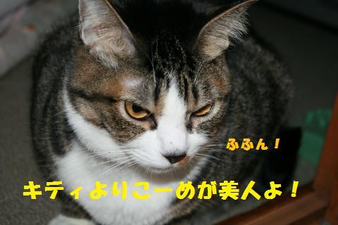 009_convert_20110213175209.jpg