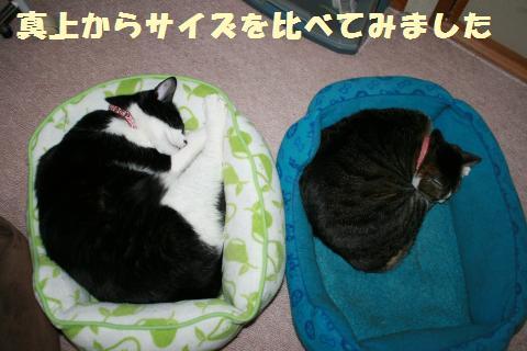 009_convert_20110606182412.jpg