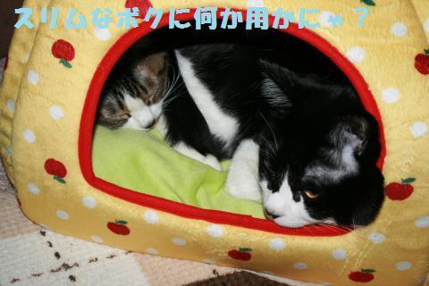 009_convert_20120214231310.jpg
