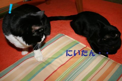 010_convert_20100209222838.jpg