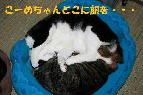 010_convert_20100420224739.jpg